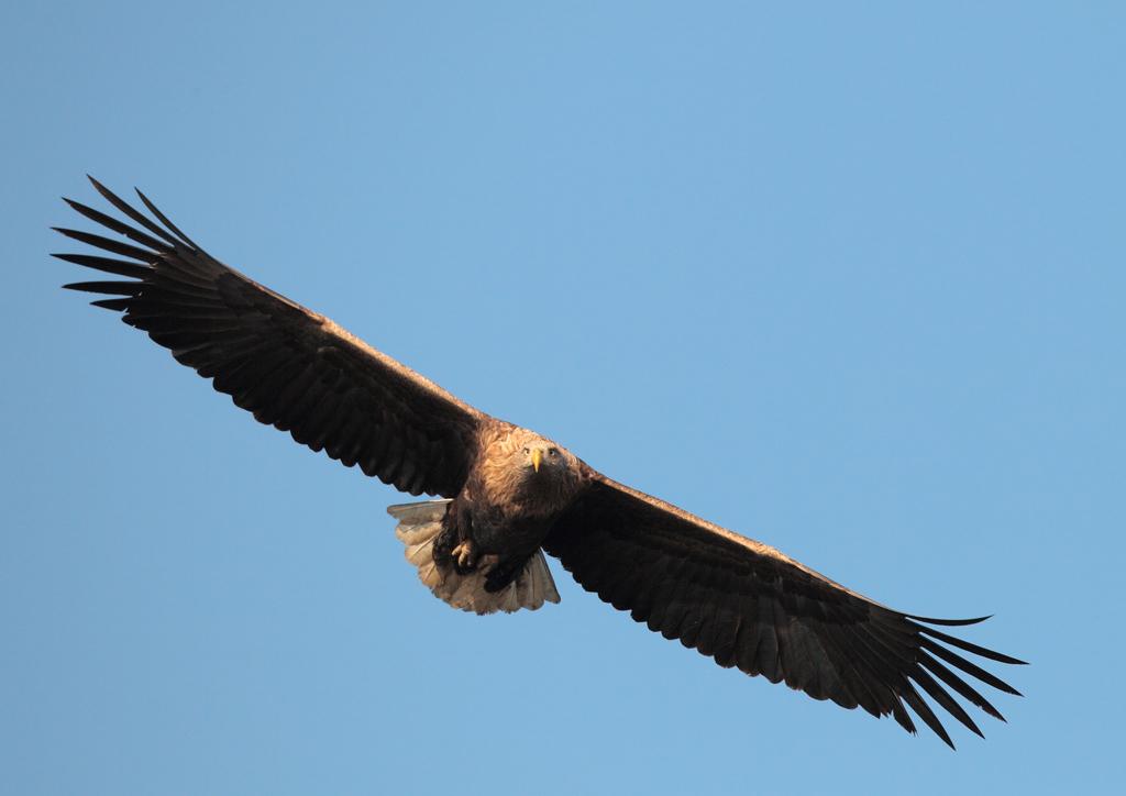 Фото дня орлан белохвост