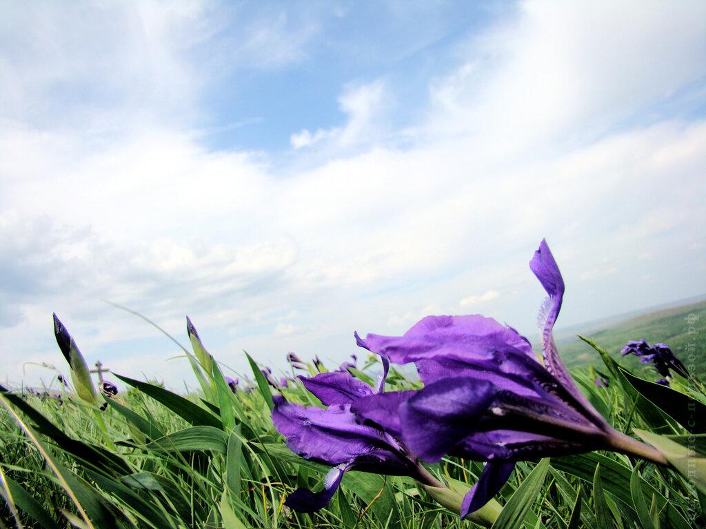 Макросъемка в поле, цветок на зеленом холме