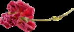«Rossi__Leticia»  0_85968_f0b7b4c2_S
