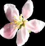 «A butterfly is a flying flower»  0_86aa1_573fe188_S