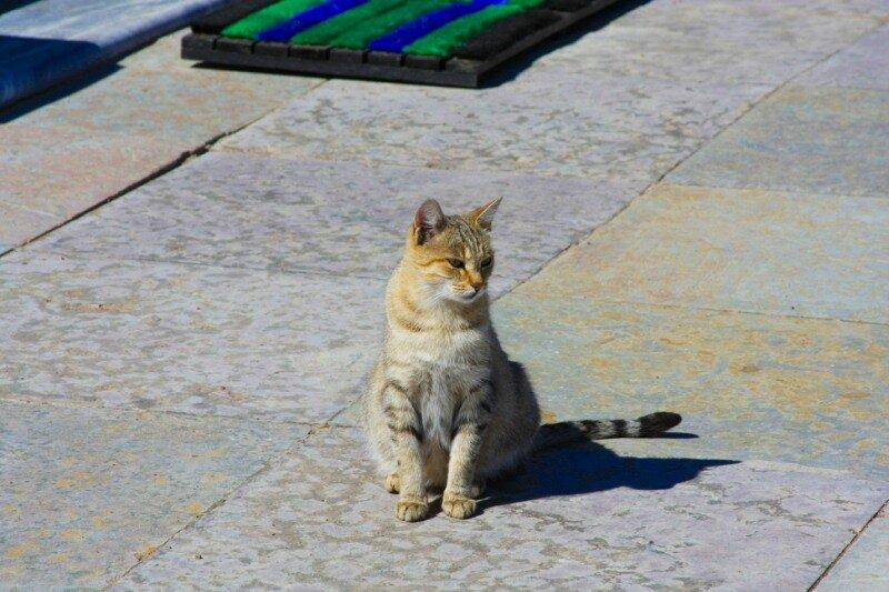 Ораниенбаумская кошка