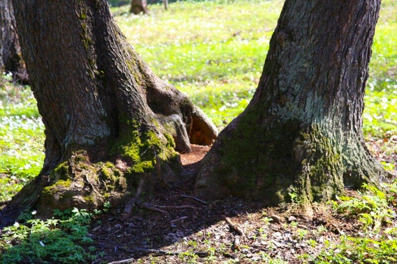 Старые деревья