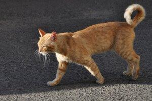 Кот, который гуляет сам по себе...