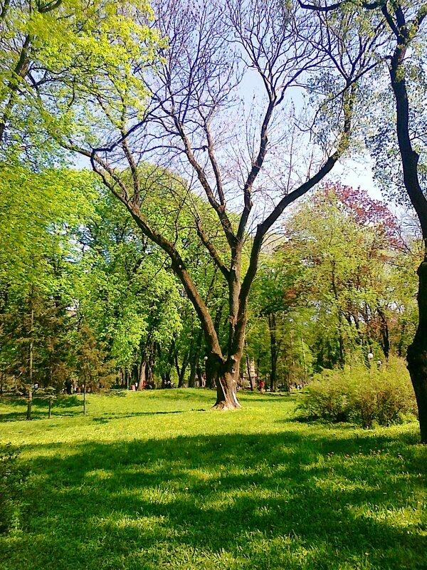 Дерево в Мариинском парке