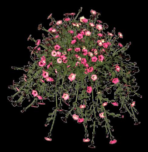 Картинки по запросу клипарт на прозрачном фоне букеты полевых цветов