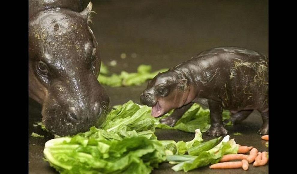 Животный мир: материнская любовь