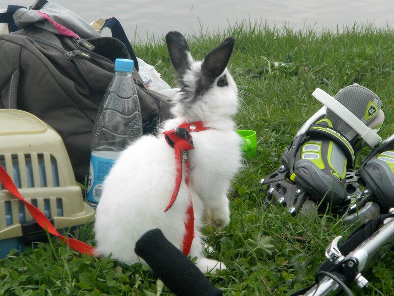 На роликах как кролики