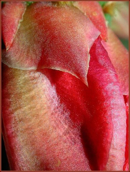 свою очередь, фотография девичьих органов фото приколы