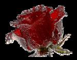 1137 - rose - LB TUBES.png
