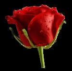 0288-rose-LB TUBES.png
