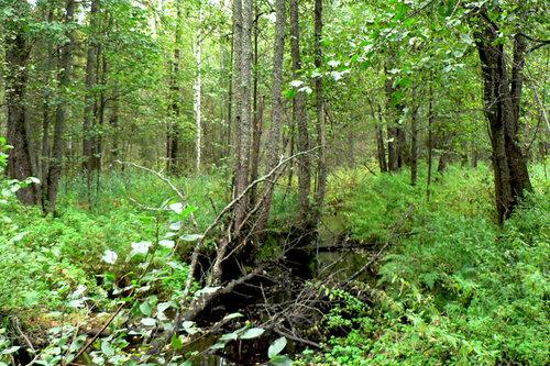 болотистая речка