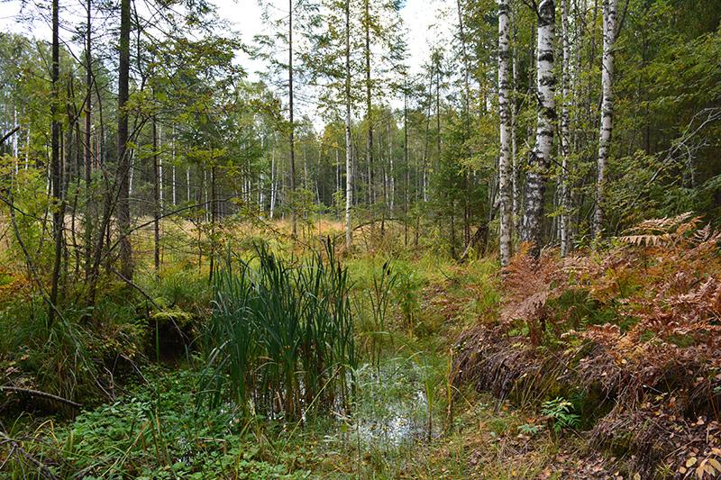 мой лес 16 болото.jpg