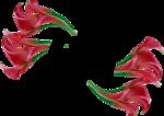 fleur_transformer _by maxou.png