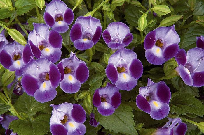 каталог цветов с графиями