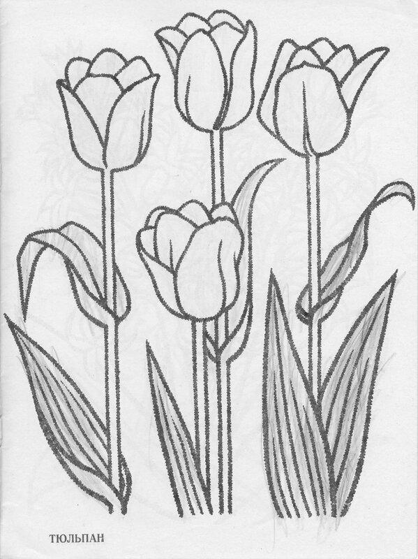 Раскраски к сказке петушок и бобовое зёрнышко