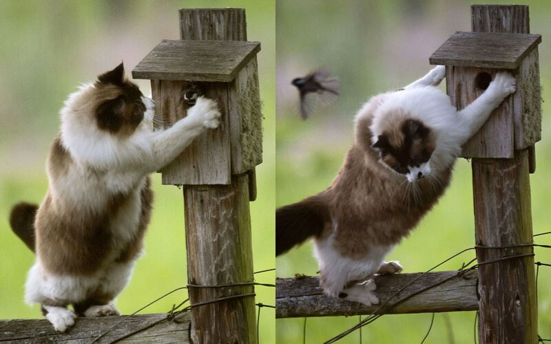 Везучая птичка