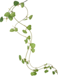 NLD I Sea You Addon Plant (2).png