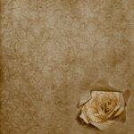 «Rose Wedding»  0_85652_f6eba3f2_S