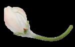 «En_ton_hommage»  0_86115_f095f50f_S