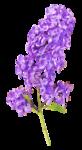 «La_magie_des_fleurs» 0_8626f_586721cd_S