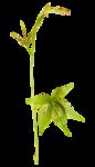 «La_magie_des_fleurs» 0_8627f_6081135e_S
