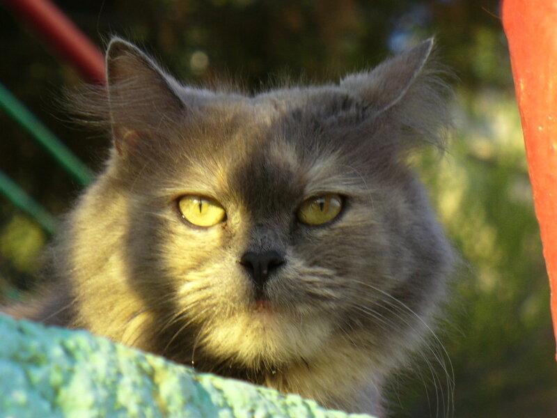 Апрельская кошка