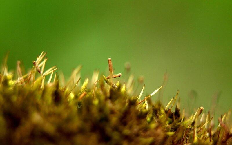 Лес из мха