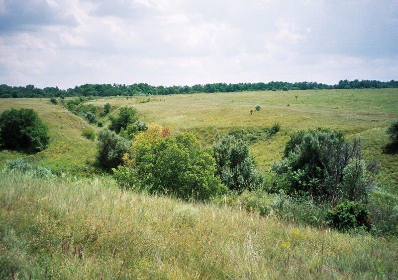 Балка в степи, Белокалитвенский район Ростовской области