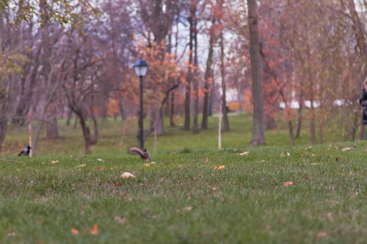 Белки в Царицыно