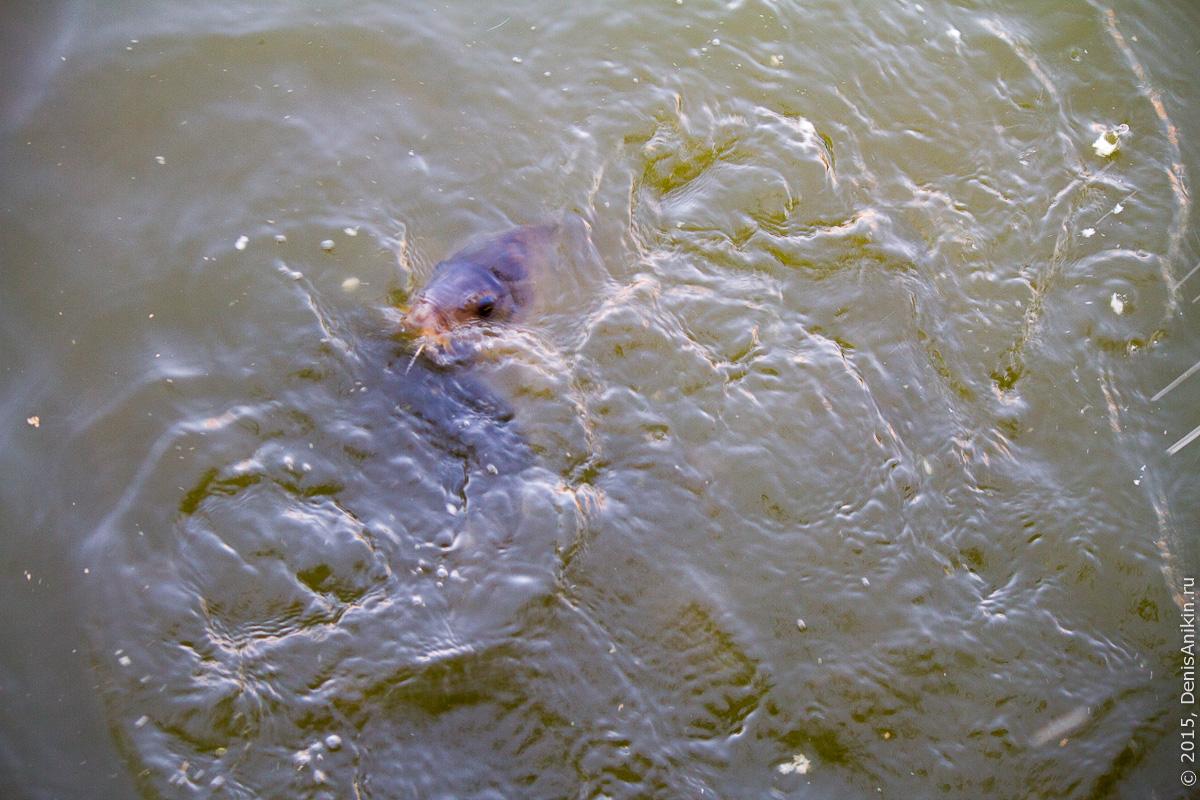 Астрахань лебединое озеро 5