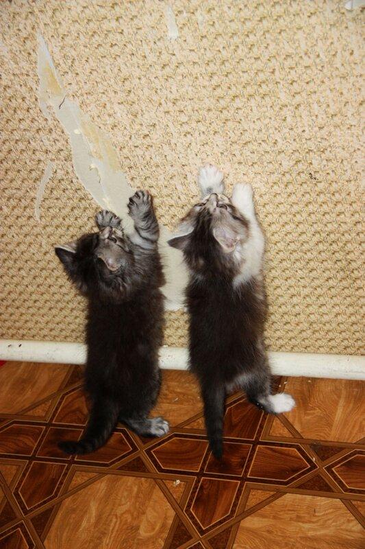 котэ, котята
