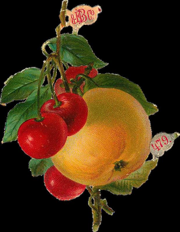 Картинки фруктов для детей цветные - 8