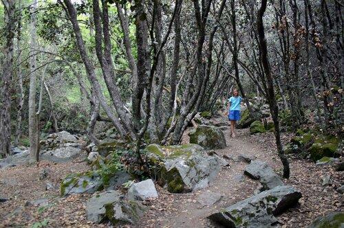 В заповедных и дремучих страшных кипрских лесах...