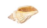 LaurieAnnHGD_SeaShell2.png