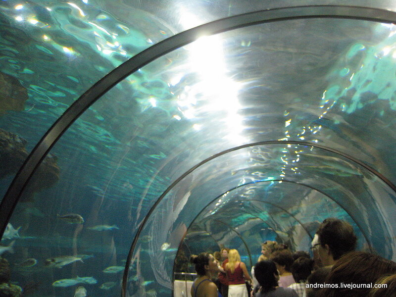 Акваріум барселони l aquarium de barcelona