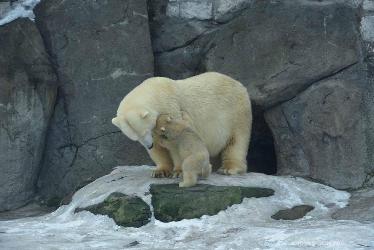 Пополнение в зоопарке