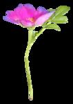 «La_magie_des_fleurs» 0_8627b_73c2b472_S