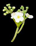 «La_magie_des_fleurs» 0_86283_25db29f8_S