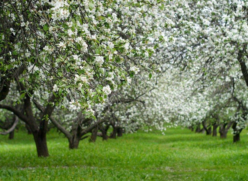 300 гектаров новых садов высадят на Ставрополье