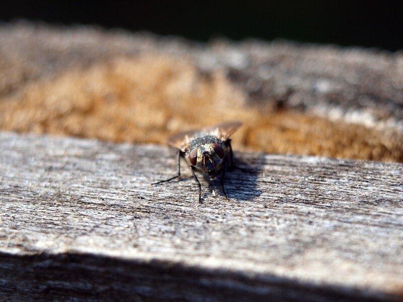 муха на заборе