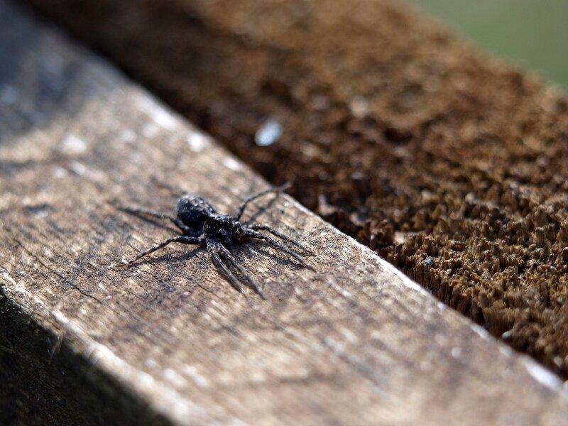 паук на заборе