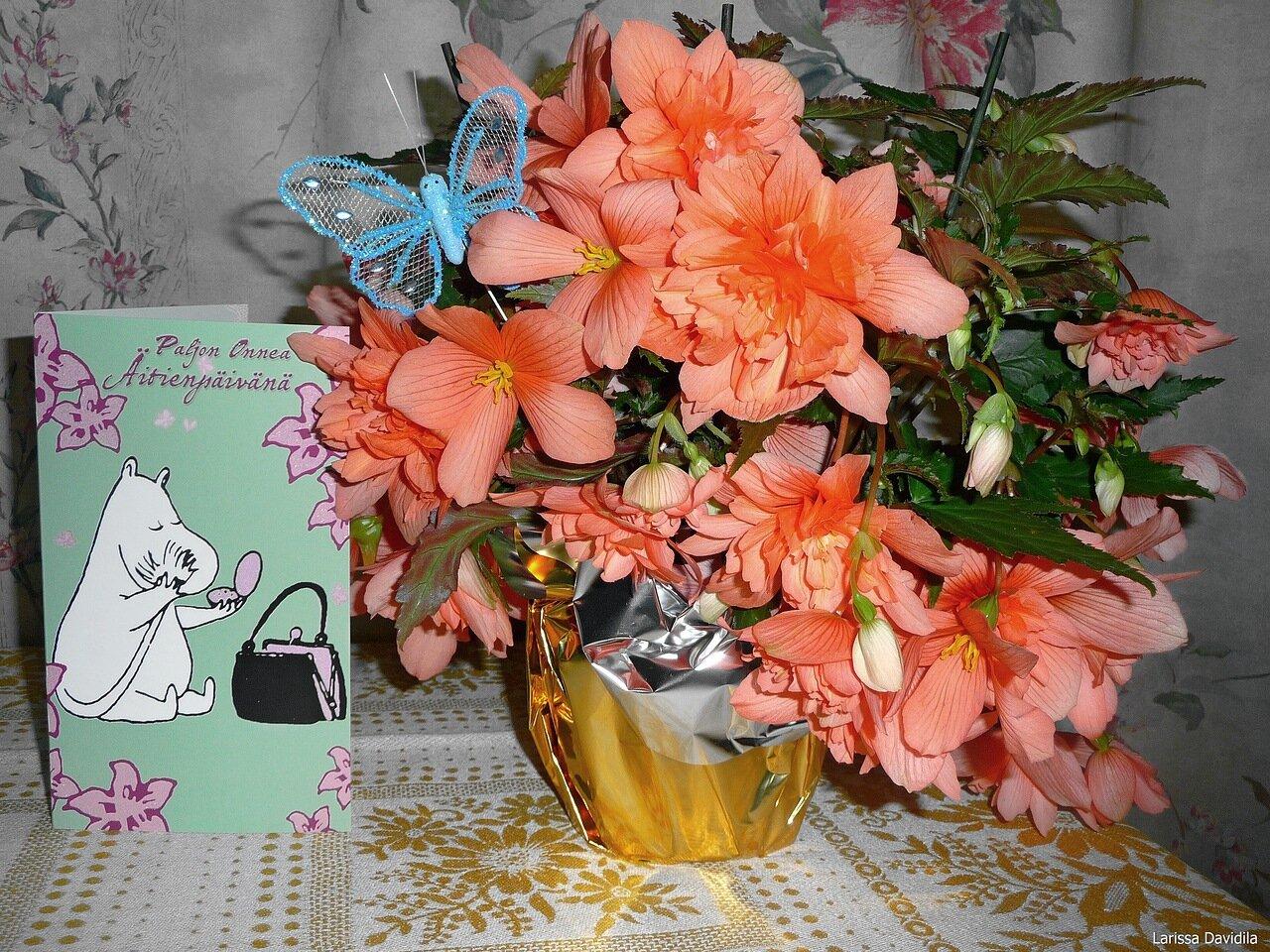 13.5.2012 - День Матери и Бабушки.