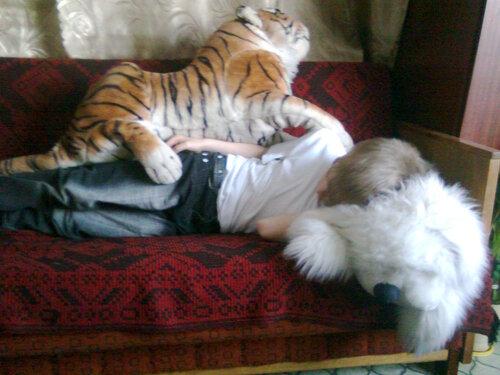 Одеяло тигровое, обыкновенное