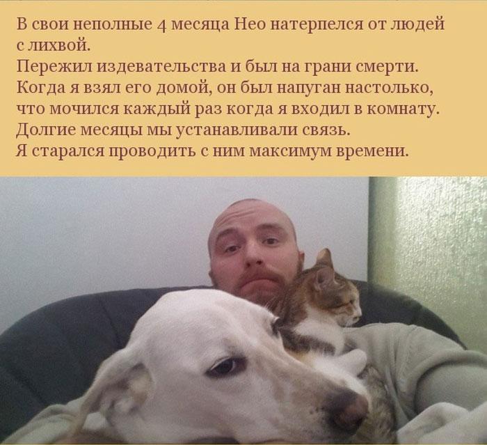 Как пес отплатил своему хозяину за спасение