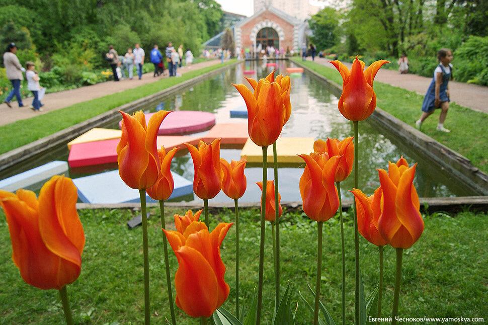 Весна. Родительский день Суббота. 21.05.11.11...jpg