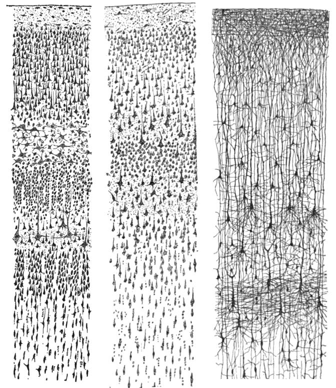 Cajal_cortex_drawings.png