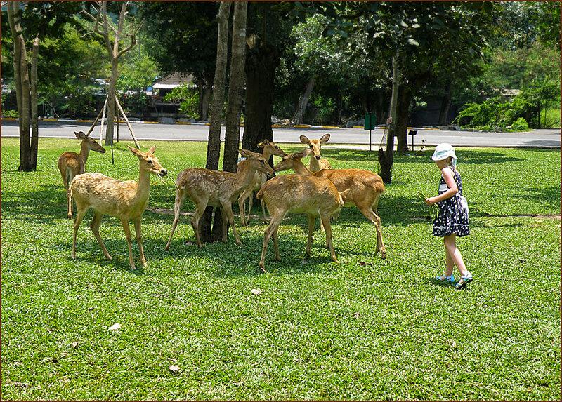Прогулка с оленями