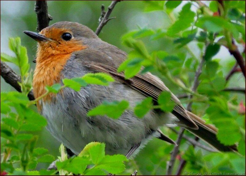 Пение птиц воробей скачать бесплатно mp3