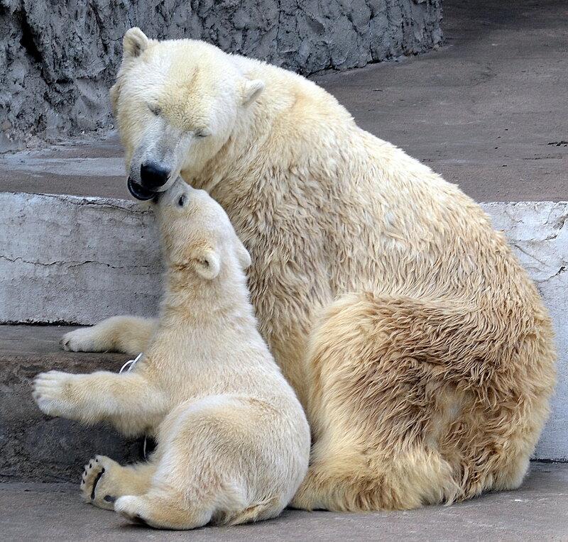 Нежный поцелуй медвежонкиной мамы)
