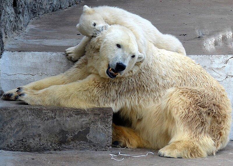 Ну мама, послушай, что скажу на ушко!)
